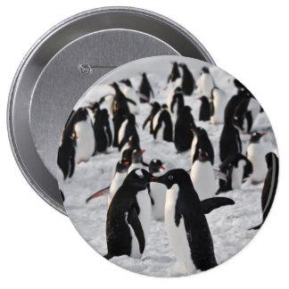 Pingouins au jeu pin's