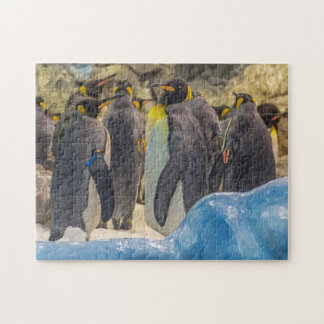 Pingouins au puzzle de photo de zoo