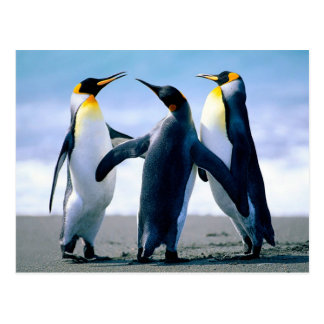 Pingouins Carte Postale