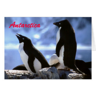 Pingouins d'Adelie dans la carte de voeux de