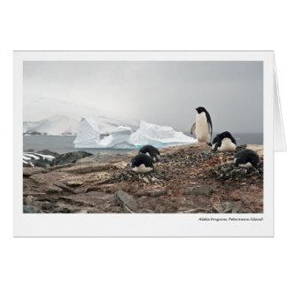 Pingouins d'Adelie, île de Petermann Carte De Vœux