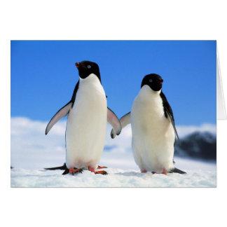 pingouins d'amants carte de vœux