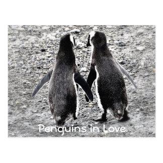 Pingouins dans l'amour carte postale