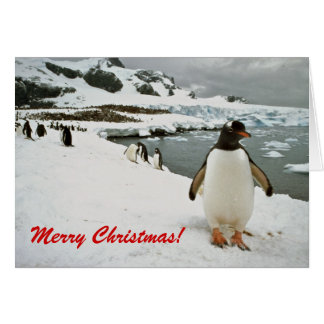 Pingouins de Gentoo dans la carte de Noël de