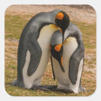 Pingouins de roi caressant, les Malouines Sticker Carré