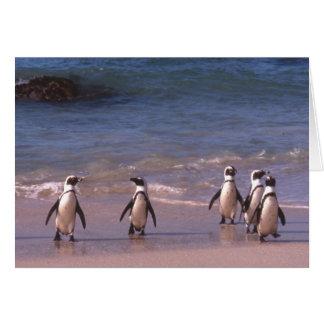 Pingouins sur la carte de plage