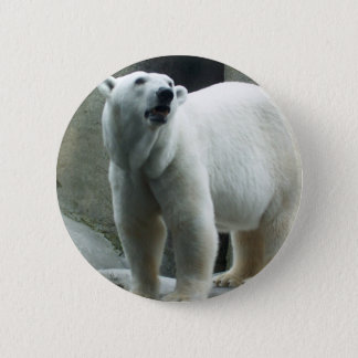 Pin's Bouton blanc d'ours blanc