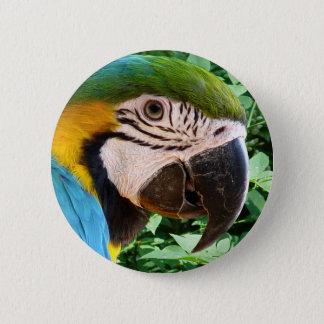 Pin's Bouton bleu de perroquet d'ara