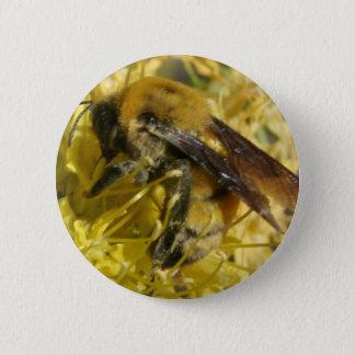 Pin's Bouton d'abeille