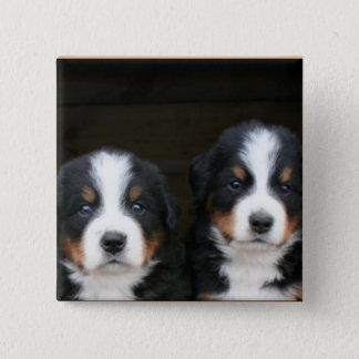 Pin's Bouton de chiots de chien de montagne de Bernese