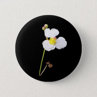 Pin's Cadeaux et habillement blancs d'orchidée