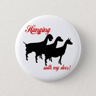 Pin's Chèvres de laiterie