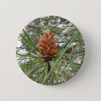 Pin's Cônes non mûrs de mâle ou de pollen de pin