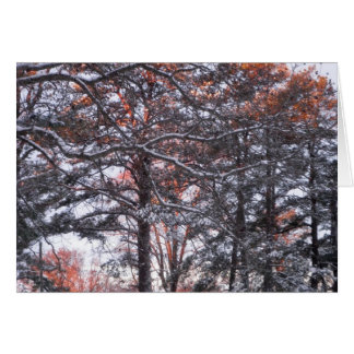 Pins grands dans la neige à la photo d'hiver de le carte de vœux