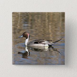 Pin's Le canard de canard pilet nage dans un étang