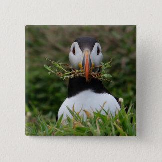 Pin's Macareux de constructeur de nid