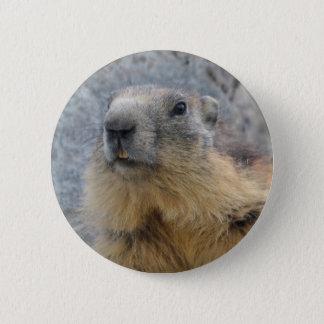 Pin's Marmotte alpine de plan rapproché