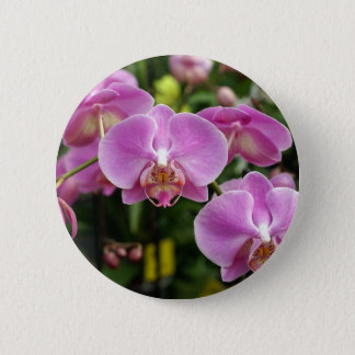 Pin's orchid_fresh_flower