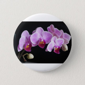 Pin's orchids-837420_640