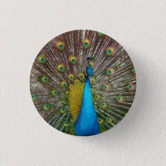 Pin's Paon majestueux avec Teal et des plumes de queue
