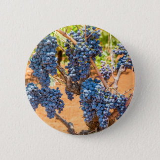 Pin's Plante de raisin avec les groupes grapes.JPG bleu