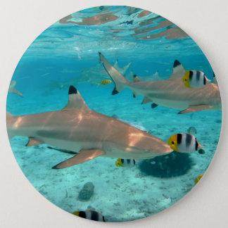 Pin's Requins dans la lagune de Bora Bora