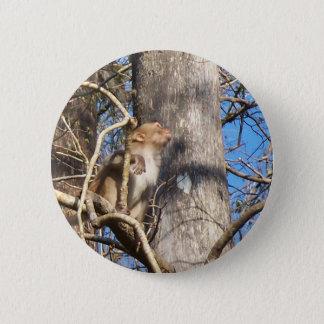 Pin's singe de macaque du rhésus 002a recherchant
