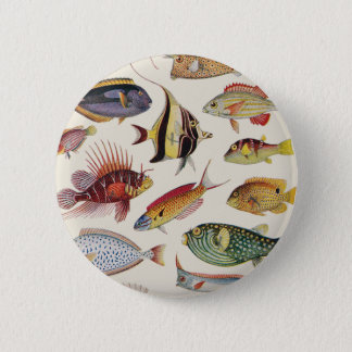 Pin's Variétés de poissons