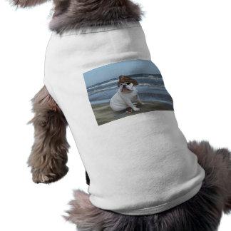Pirate de bouledogue sur la plage vêtements pour animaux domestiques
