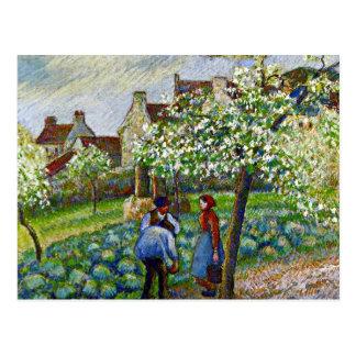 Pissarro - pruniers fleurissants carte postale