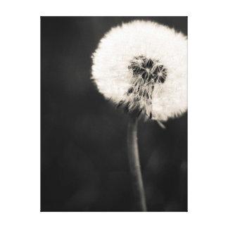Pissenlit noir et blanc toile tendue