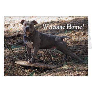 Pitbull avec la carte de maison d'accueil de