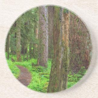 Pittoresque de la forêt de peuplement vieux dessous de verre