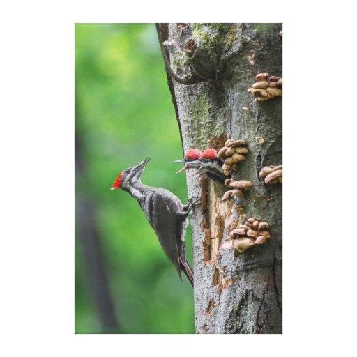 Pivert femelle de Pileated au trou de nid Impression Sur Toile