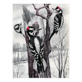 Piverts duveteux et velus en hiver cartes postales
