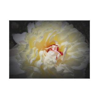 Pivoine blanche avec l'arrière - plan noir sur la toiles