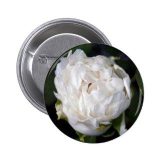 Pivoine blanche - photographie florale - badges avec agrafe