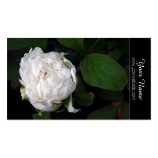Pivoine blanche - photographie florale - cartes de carte de visite standard