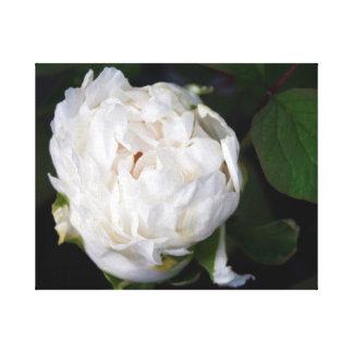 Pivoine blanche - photographie florale - toile toile tendue sur châssis