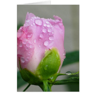 Pivoine rose carte de correspondance