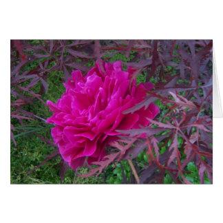 Pivoine rose carte de vœux