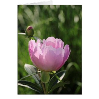 Pivoine rose simple carte de correspondance