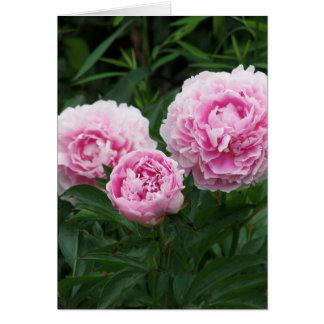 Pivoines roses, anniversaire carte de vœux