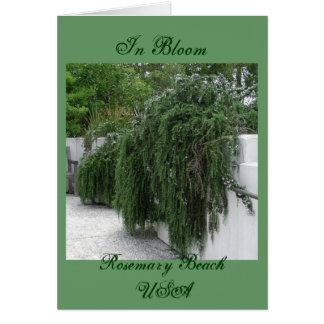 Plage de Rosemary, Rosemary Cartes