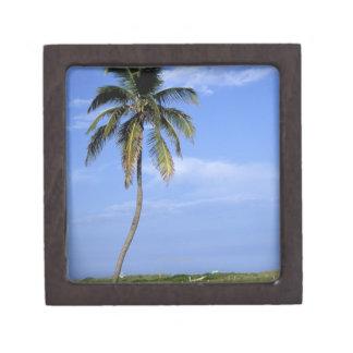 Plage du sud, Miami Beach, la Floride, Etats-Unis Coffret Cadeau De Première Qualité