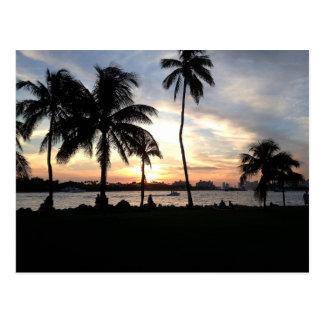 Plage du sud, palmiers de Miami à la carte postale