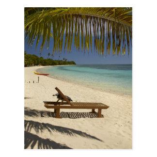 Plage, palmiers et fainéant cartes postales