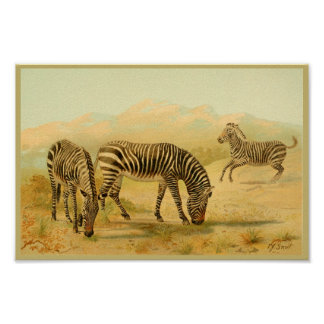 Plaines animales vintages d'Africain d'impression Poster
