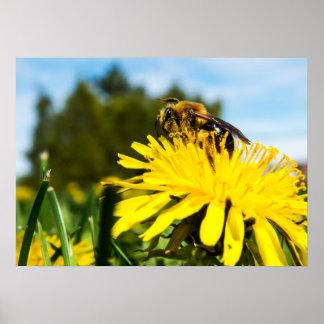 Plan rapproché d'abeille poster