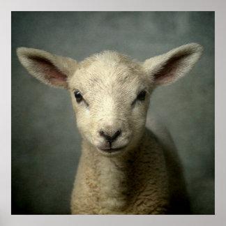 Plan rapproché d'agneau nouveau-né avec le fond gr posters